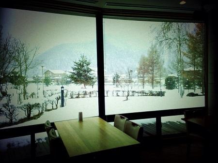 さわらび冬.jpg
